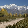 Winery -  Mendoza
